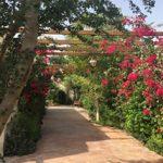garden_img_011